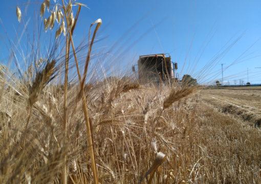 Nuovo sito dell'Azienda Agricola Di Traglia